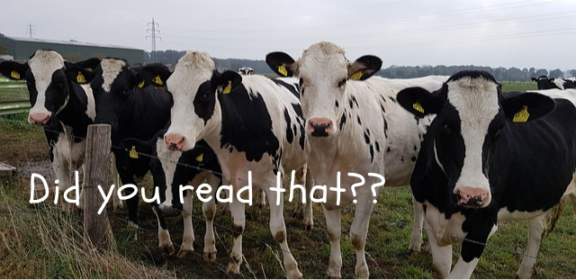 Cows are at attention reading an email that creates curiosity about magic.